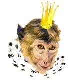 Aquarellporträt des Affen mit einer Krone Stockfotos