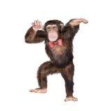 Aquarellporträt des Affen mit einer Krone Stockfoto