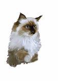 Aquarellporträt des Katzenillustrationsvektors Stockbild