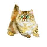 Aquarellporträt des Menuetts oder des netten Kätzchens Napoleon auf weißem Hintergrund Lizenzfreie Stockfotos