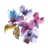 Aquarellpurpurblumen Herbst mit Blumen Ausführliche vektorzeichnung Autumn Floral Design Blaue Auslegung lizenzfreie abbildung