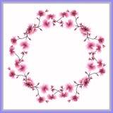 Aquarellrahmen ein Kranz von rosa Blumen auf einem weißen Hintergrund Lizenzfreies Stockbild