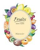 Aquarellrahmen von Früchten lizenzfreie abbildung