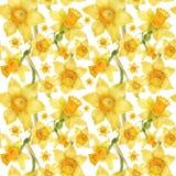 Aquarellrealistisches Blumenmuster mit Narzisse lizenzfreie stockfotos