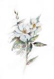 Aquarellrosenblume Stockbild