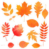 Aquarellsammlung schöner orange Herbstlaub Stockbilder