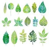 Aquarellsatz Baumblätter Stockfotos