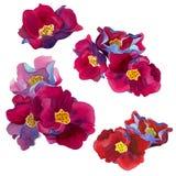 Aquarellsatz Blumen mit Rosa und roten Blumenblatt-, Blauen und violettenschatten lizenzfreie stockfotografie