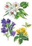 Aquarellsatz Blumen lizenzfreie stockfotos
