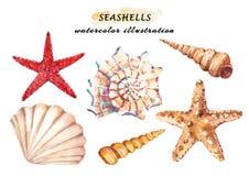Aquarellsatz Unterwasserleben wendet - verschiedene tropische Muscheln und Starfish ein stock abbildung