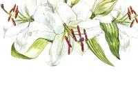Aquarellsatz weiße Lilien, Hand gezeichnete botanische Illustration von den Blumen lokalisiert auf einem weißen Hintergrund Lizenzfreies Stockbild