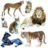 Aquarellsatz Wildkatzen stock abbildung
