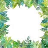Aquarellschablone mit Baumblättern lizenzfreies stockfoto