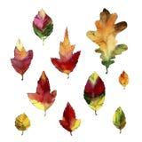 Aquarellskizzen eingestellt Autumn Leaves Stockfotografie
