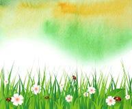 Aquarellsommerhintergrund mit grünem Gras Stockfoto