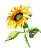 Aquarellsonnenblume stock abbildung