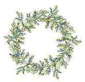 Aquarellwacholderbuschkranz Handgemalte immergrüne Niederlassung mit Beeren auf weißem Hintergrund Botanische Illustration für Lizenzfreie Stockfotografie
