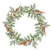 Aquarellwacholderbuschkranz mit roten Beeren Handgemalte immergrüne Niederlassung mit Beeren auf weißem Hintergrund botanisch Lizenzfreies Stockbild