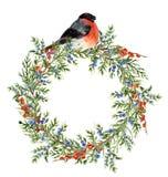 Aquarellwacholderbuschkranz mit roten Beeren und Dompfaff Handgemalte immergrüne Niederlassung mit Beeren und Vogel auf Weiß Lizenzfreie Stockbilder