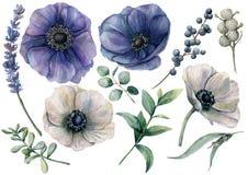 Aquarellweißer und blauer Blumensatz Handgemalte blaue und weiße Anemone, brunia Beere, Eukalyptus verlässt, Lavendel stock abbildung