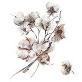 Aquarellweinleseblumenstrauß von Baumwollblumen Stockbild