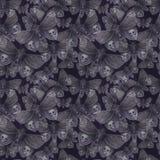 Aquarellzeichnung eines Schmetterlingsnachtschmetterlinges, des schrecklichen Schmetterlinges an einem Halloween-Feiertag mit ein Stockbilder