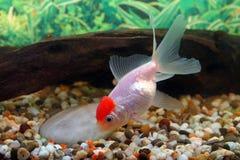 aquarian ψάρια Στοκ Εικόνες
