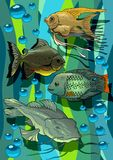 Aquarian fishes Royalty Free Stock Photos