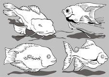 aquarian ryba Obrazy Stock