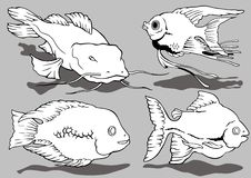 aquarianfiskar Arkivbilder