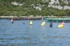 Aquarien für züchtende Fische kroatien Das adriatische Meer Stockfoto