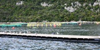 Aquarien für züchtende Fische kroatien Das adriatische Meer Lizenzfreie Stockbilder