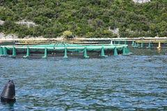 Aquarien für züchtende Fische kroatien Das adriatische Meer Lizenzfreie Stockfotos
