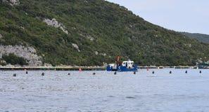 Aquarien für züchtende Fische kroatien Das adriatische Meer Stockfotos