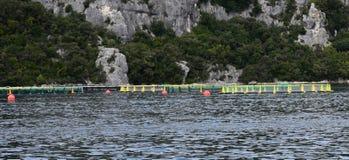 Aquarien für züchtende Fische kroatien Das adriatische Meer Lizenzfreies Stockfoto