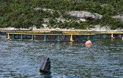Aquarien für züchtende Fische kroatien Das adriatische Meer Lizenzfreie Stockfotografie