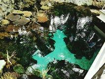 Aquario Photo stock