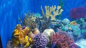 AquaRio -  Marine Biology. Comunidade coralínea,comum em ambientes tropicais Stock Photos