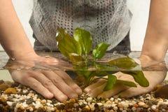 Aquarist που φυτεύει τις υδρόβιες εγκαταστάσεις στο ενυδρείο Στοκ Εικόνες
