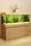 Aquarium à la maison Image libre de droits