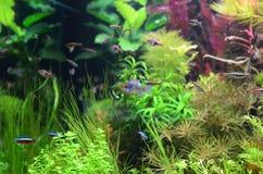 Aquarium à la maison photo libre de droits