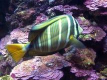 Aquarium électrique Images stock
