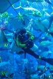 Aquarium énorme à Dubaï. Poissons de alimentation de plongeur. Images stock