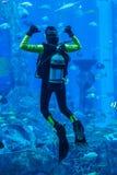 Aquarium énorme à Dubaï. Poissons de alimentation de plongeur. Image stock