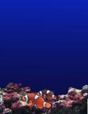 Aquarium Stock Afbeeldingen