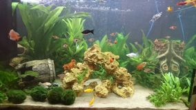 Aquarium lizenzfreie stockfotografie