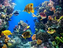 Aquarium. Underwater aquatic life with fishes