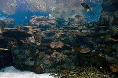 Aquarium. Colorful fish swimming in a tropical aquarium Royalty Free Stock Photos