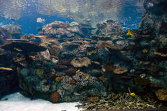 Aquarium. Underwater scene in a tropical aquarium Royalty Free Stock Photo