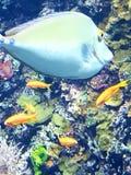 Aquarium photos libres de droits